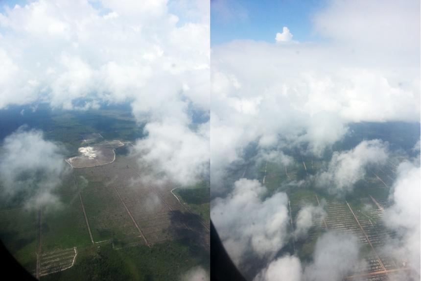 avion-huile-palme