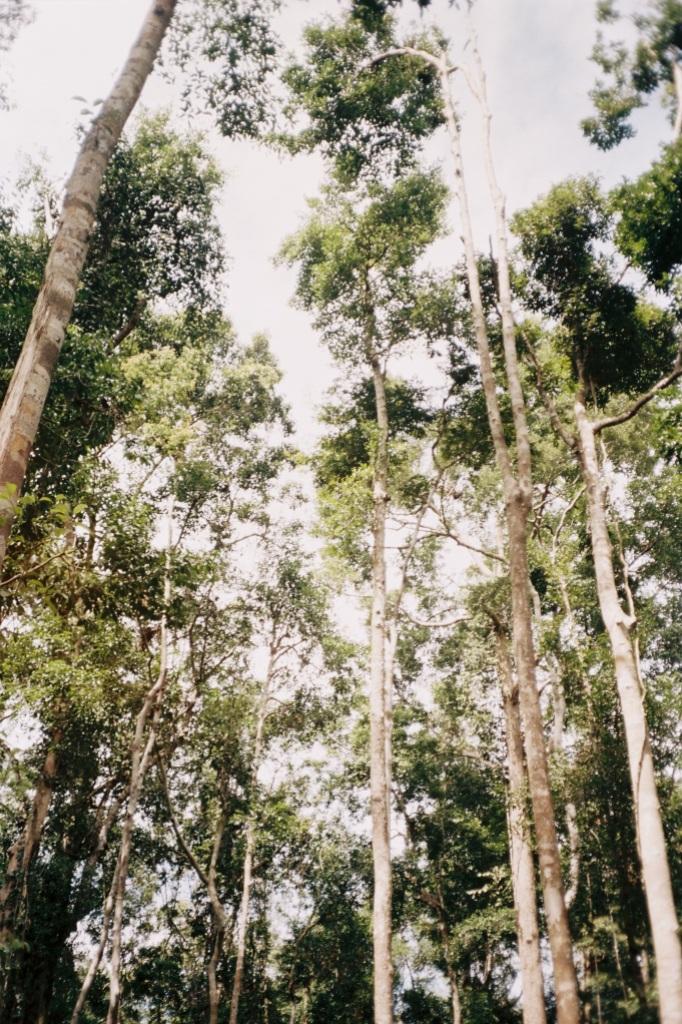 Love trees / Camera : Vivitar 35 ES + Kodak Portra 160